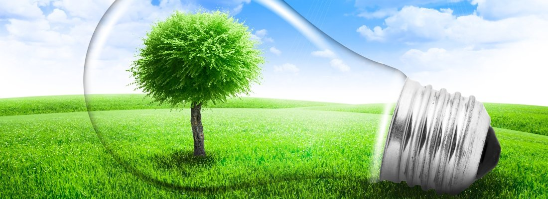 Lightbulb with a tree growing inside in field. Environment or energy concept background